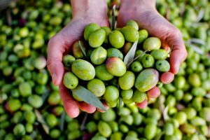 An Olive Odyssey – Olive Oil Sommelier Experience & Tour (7hrs) €135pp
