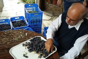 Village Venture Larnaca – Rural Villages Food Tour (8hrs) €95pp