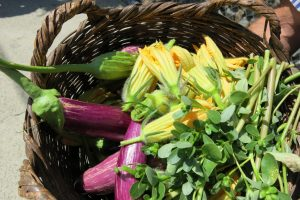 Garden To Plate- Cooking Class & Troodos Mountain Villages Tour (8-9hrs) €110pp