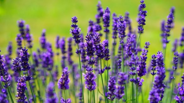 The Herbal Hunt – Tasting Class & Tour (7hrs) €120pp
