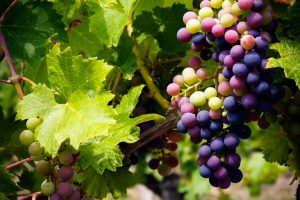 The Grape Escape Winery Tour (4.5hrs) €57.50pp