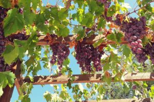 Beyond The Grape – Mountain Villages & Wineries Tour (6hrs) €80pp